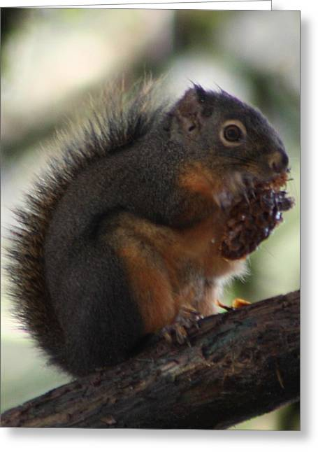 Squirrel Greeting Cards - Lunch Time Greeting Card by Nick Gustafson
