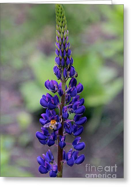 Artistic Photography Greeting Cards - Lupin flower wolf Greeting Card by Sergey Lukashin