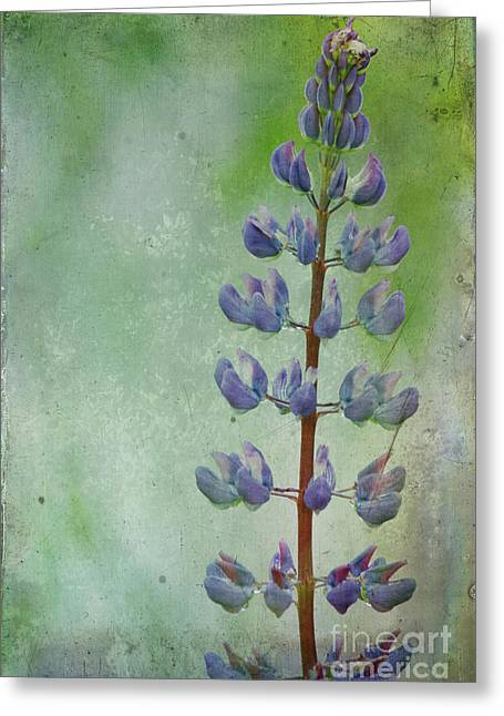 Maine Meadow Greeting Cards - Lupine Greeting Card by Cindi Ressler