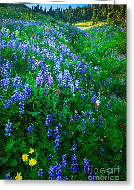 Peaceful Scene Photographs Greeting Cards - Lupine Cornucopia Greeting Card by Inge Johnsson