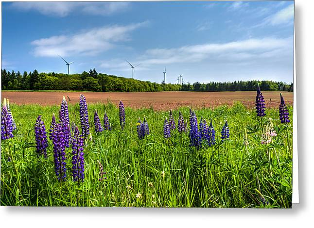 Red Dirt Greeting Cards - Lupins in a Field Greeting Card by Matt Dobson
