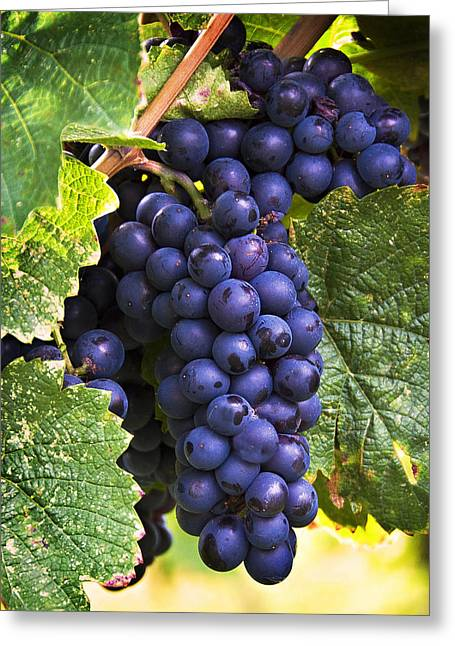 Blue Grapes Greeting Cards - Luscious Grape Cluster Greeting Card by Marion McCristall