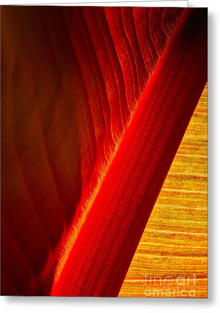 Luscious Lines Greeting Card by Marilyn Cornwell
