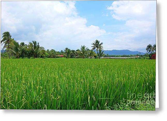 Lush Green Greeting Cards - Lush and Green Rice Field with Palm Trees Greeting Card by Yali Shi