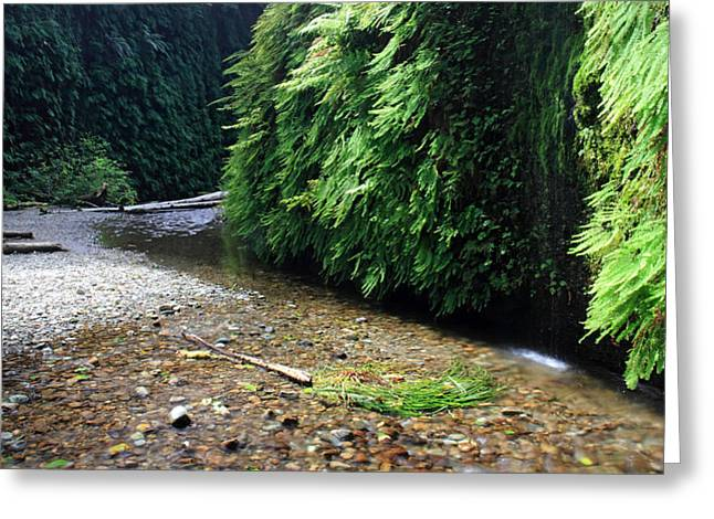 Old Growth Greeting Cards - Lush Fern Canyon Greeting Card by Pierre Leclerc Photography