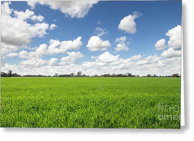 Lush Green Fields Greeting Card by Linda Lees
