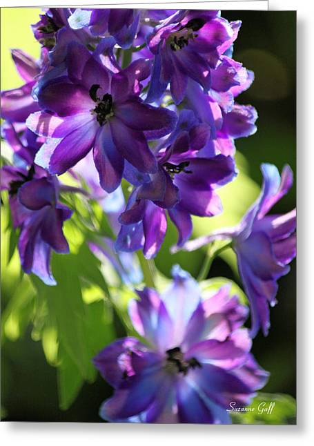 Delphinium Greeting Cards - Lush Greeting Card by Suzanne Gaff