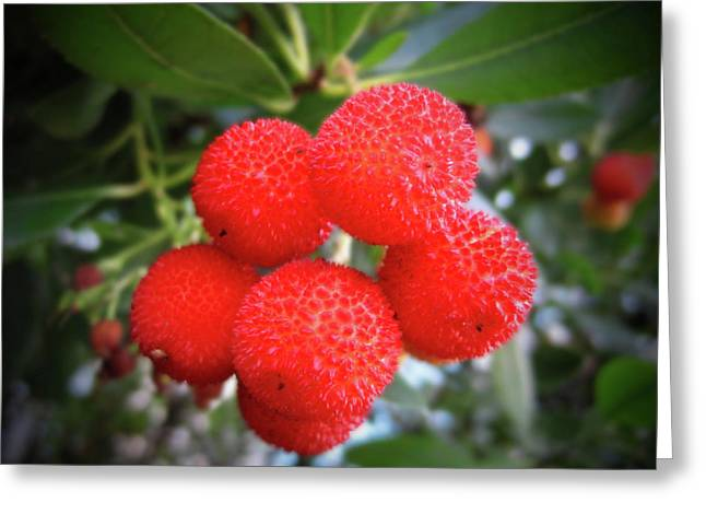 Passion Fruit Greeting Cards - Lychee Tree Greeting Card by Kamil Swiatek