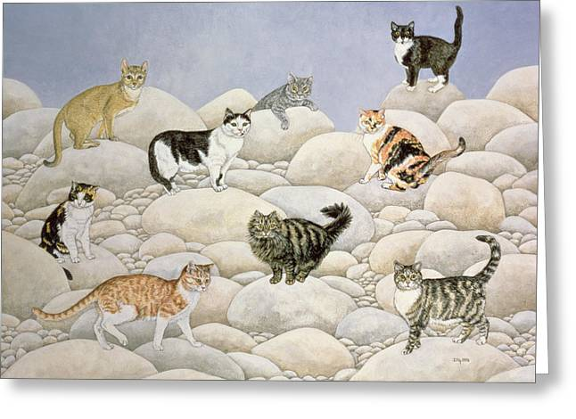 Collar Greeting Cards - Lynn Valley Cats Greeting Card by Ditz