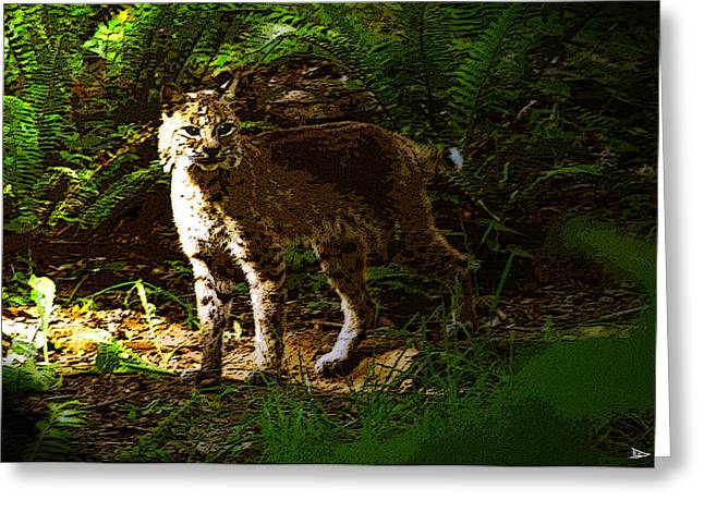Lynx rufus Greeting Card by David Lee Thompson