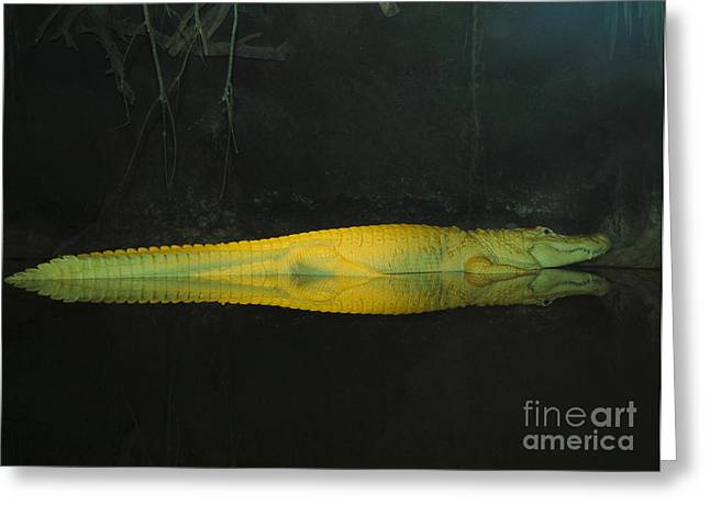 Louisiana Alligator Greeting Cards - M Greeting Card by Alicia Morales
