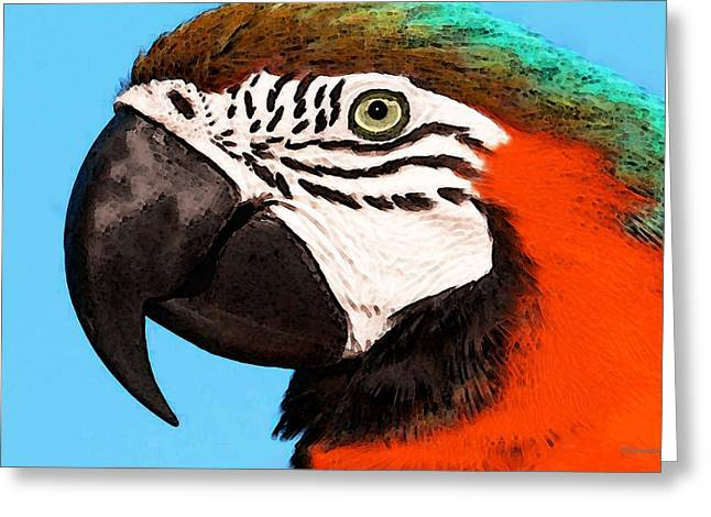 Parrot Digital Art Greeting Cards - Macaw Bird - Rain Forest Royalty Greeting Card by Sharon Cummings