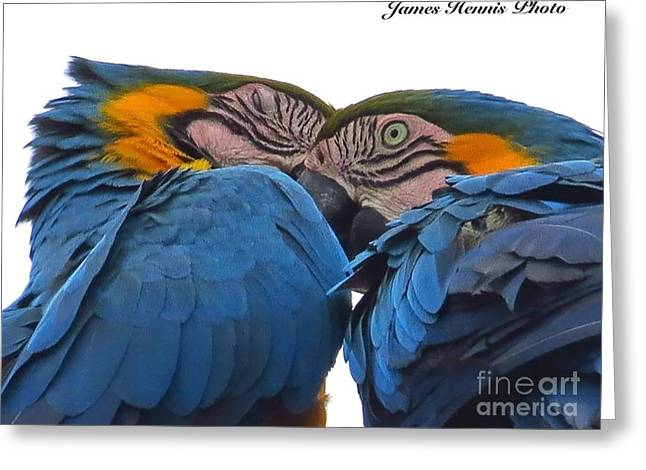 Couples Tapestries - Textiles Greeting Cards - Macaw Couple Greeting Card by James Hennis