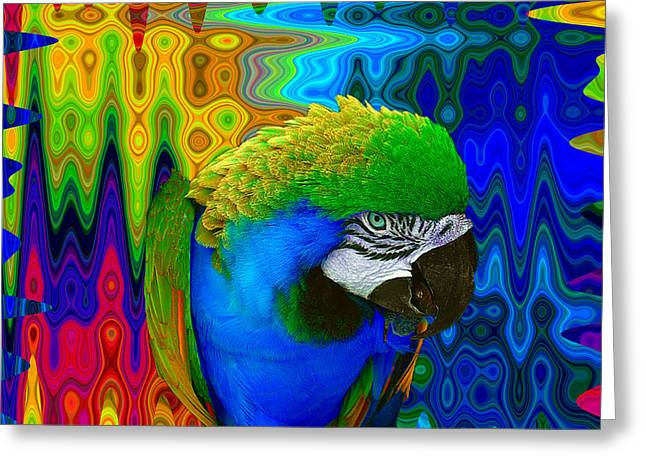 Blue Macaws Greeting Cards - Macaw Madess Greeting Card by Amanda Vouglas