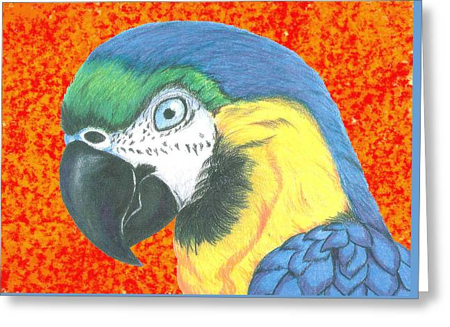 Flying Animal Pastels Greeting Cards - Macaw Greeting Card by Ricardo Gonzalez