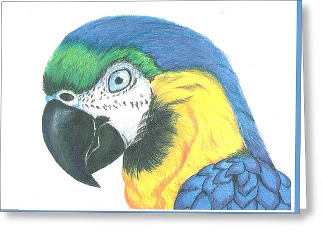 White Background Pastels Greeting Cards - Macaw with White Background Greeting Card by Ricardo Gonzalez