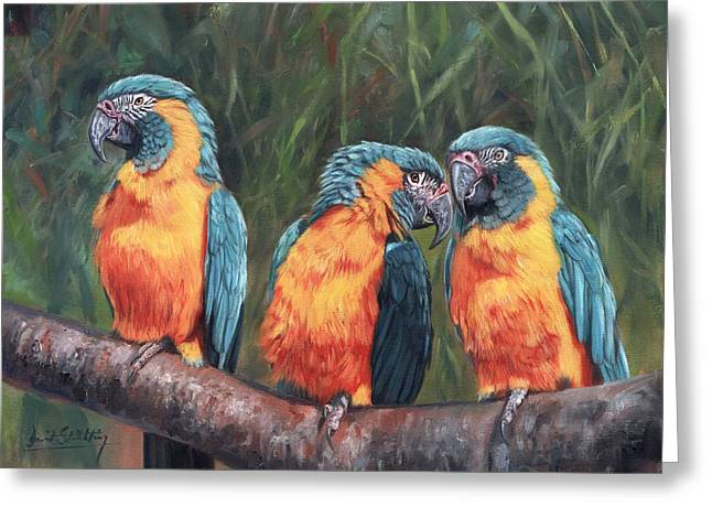Macaws Greeting Card by David Stribbling