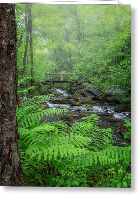 Macedonia Brook State Park Portrait Greeting Card by Bill Wakeley