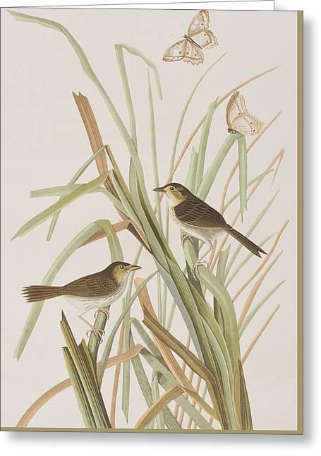 Macgillivray's Finch  Greeting Card by John James Audubon