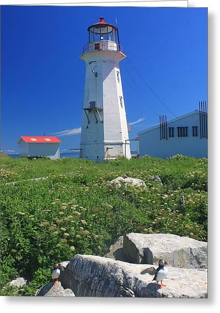 Machias Seal Island Greeting Cards - Machias Seal Island Lighthouse Puffins Greeting Card by John Burk