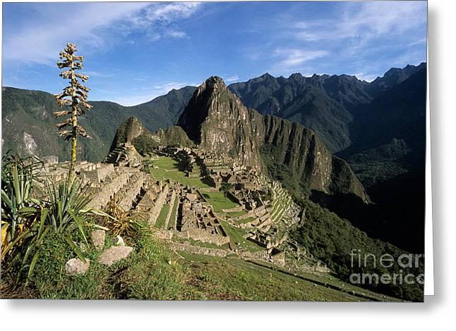Machu Picchu And Bromeliad Greeting Card by James Brunker