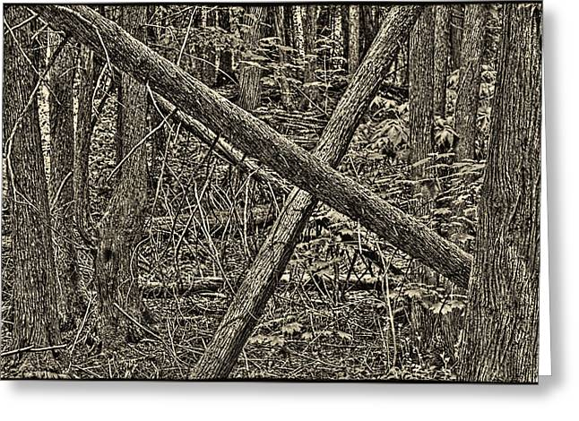 Eerie Greeting Cards - Mackinac Island Forest Greeting Card by Roger Passman
