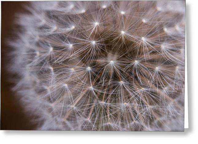 Wishes Greeting Cards - Macro Dandelion Greeting Card by Shanna Britt