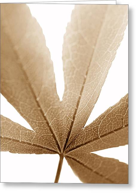 Translucent Light Greeting Cards - Macro Leaf Brown Vertical Greeting Card by Jennie Marie Schell