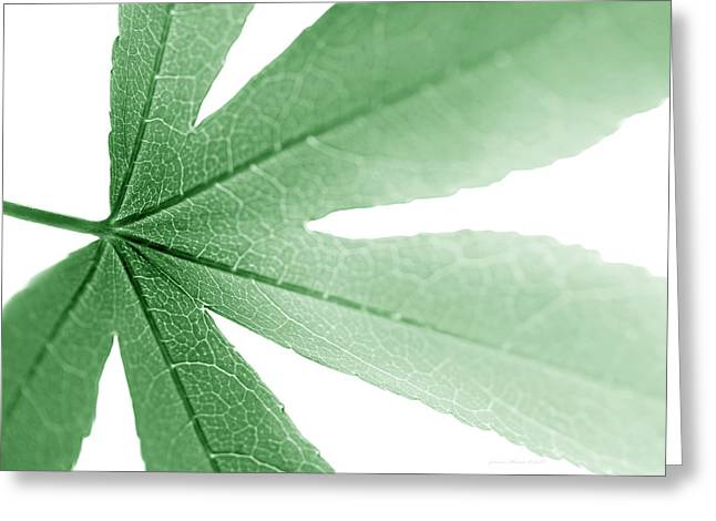 Translucent Light Greeting Cards - Macro Leaf Green Greeting Card by Jennie Marie Schell