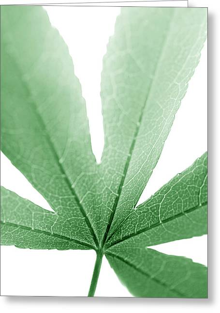 Translucent Light Greeting Cards - Macro Leaf Green Vertical Greeting Card by Jennie Marie Schell