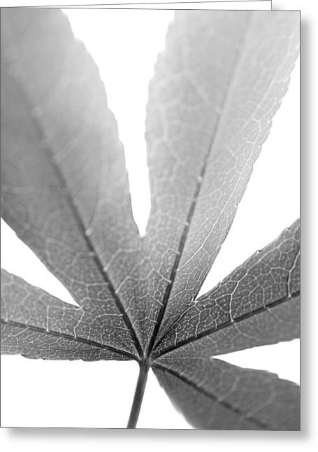 Translucent Light Greeting Cards - Macro Leaf Monochrome Vertical Greeting Card by Jennie Marie Schell