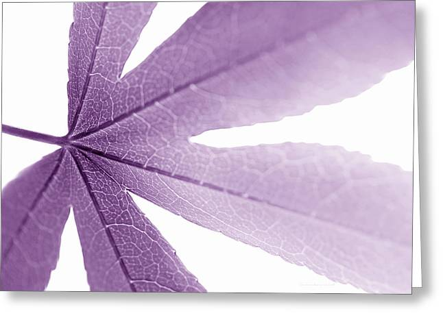 Translucent Light Greeting Cards - Macro Leaf Plum Greeting Card by Jennie Marie Schell