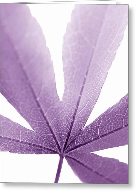 Translucent Light Greeting Cards - Macro Leaf Plum Vertical Greeting Card by Jennie Marie Schell