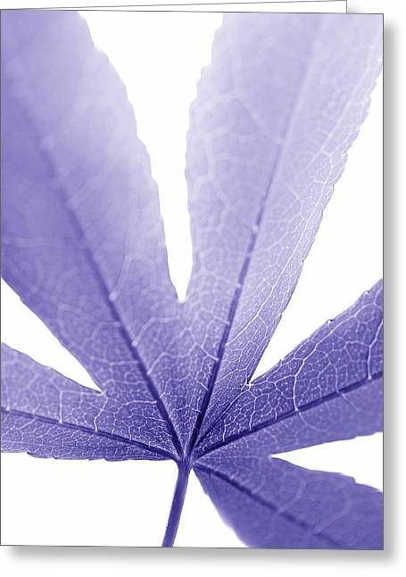 Translucent Light Greeting Cards - Macro Leaf Purple Vertical Greeting Card by Jennie Marie Schell