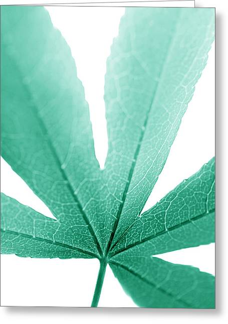 Translucent Light Greeting Cards - Macro Leaf Teal Vertical Greeting Card by Jennie Marie Schell