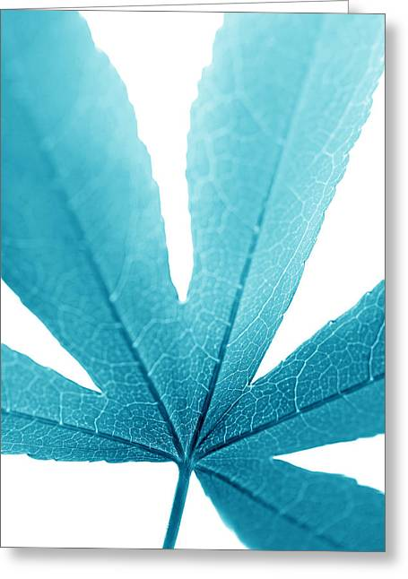 Translucent Light Greeting Cards - Macro Leaf Turquoise Vertical Greeting Card by Jennie Marie Schell