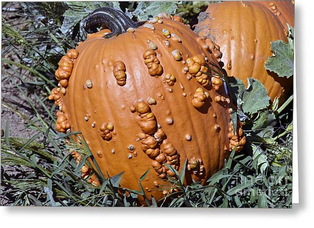 Macro Photopraph Of Gnarly Orange Pumpkins Greeting Card by Beth Wolff