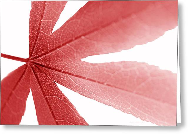 Translucent Light Greeting Cards - Macro Red Japanese Maple Leaf Greeting Card by Jennie Marie Schell