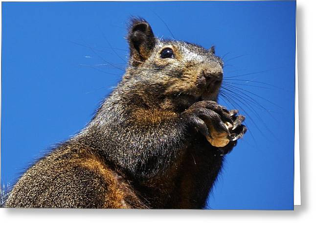 Fox Squirrel Greeting Cards - Madame on the Roof Greeting Card by CL Redding