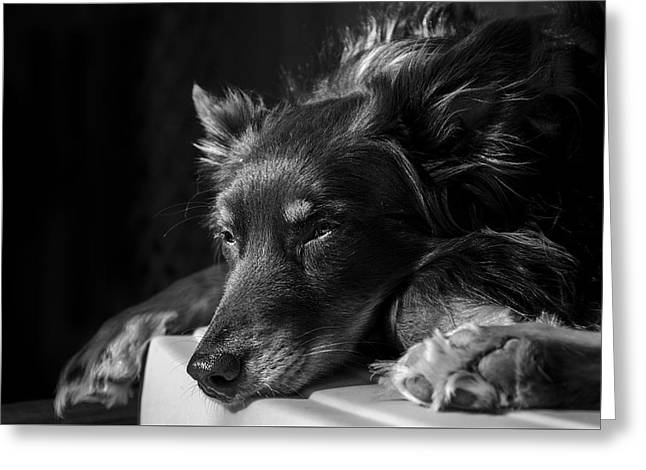 Puppies Photographs Greeting Cards - Maddie Greeting Card by Chris Anderson
