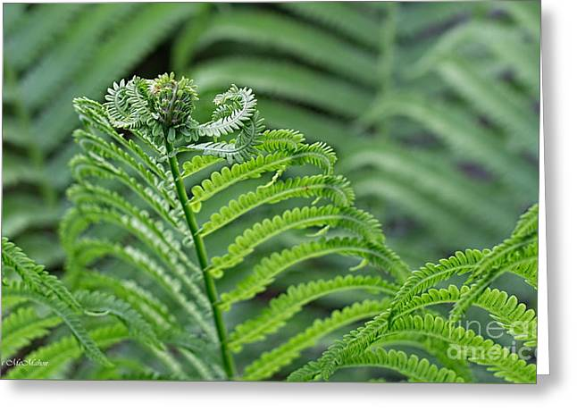 Ostrich Fern Greeting Cards - Maestro Conducting the Fern Section Greeting Card by Barbara McMahon