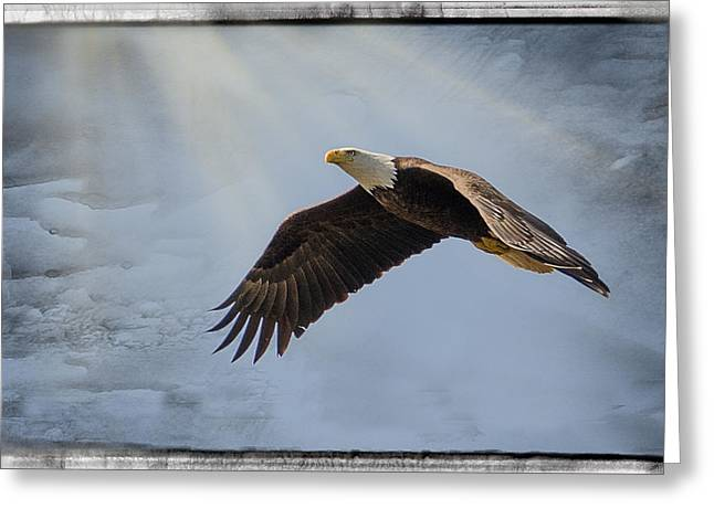 U.s.s. Pyrography Greeting Cards - Magestic Flight Greeting Card by Shirley Tinkham