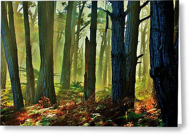 Coastal Forest Greeting Cards - Magic Forest Greeting Card by Helen Carson