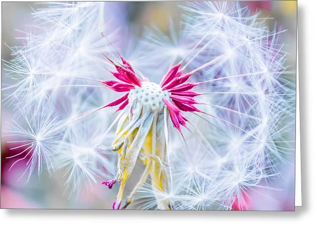 Magic In Pink Square Greeting Card by Parker Cunningham