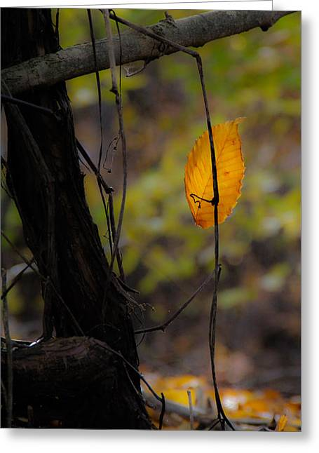 Rectangles Greeting Cards - Magic Leaf 1 Greeting Card by Donna Fonseca Newton