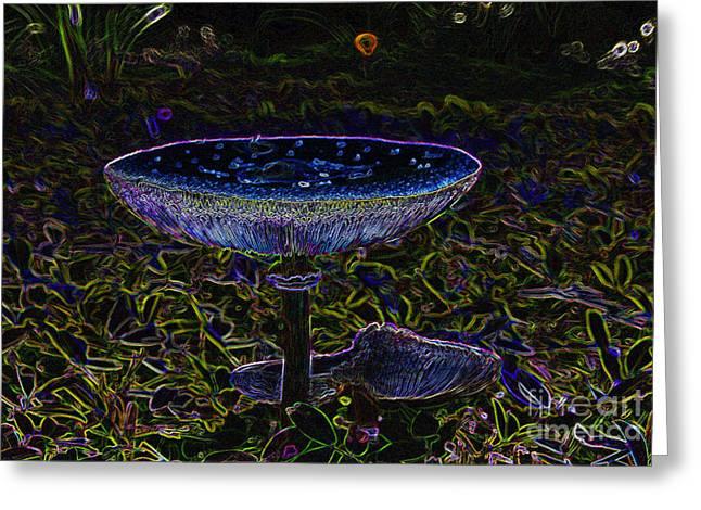 Forest Floor Greeting Cards - Magic Mushroom Greeting Card by David Lee Thompson