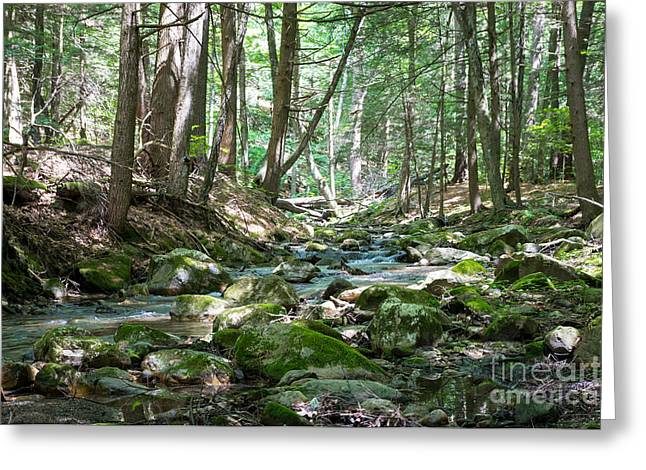 Moss Greeting Cards - Magic of a Green Forest Greeting Card by DAC Photography
