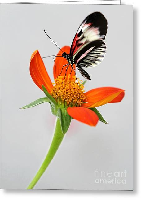 Magical Butterfly Greeting Card by Sabrina L Ryan