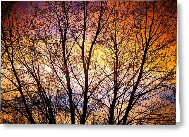 Sunset Prints Greeting Cards - Magical Colorful Sunset Tree Silhouette Greeting Card by James BO  Insogna