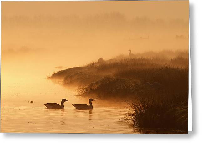 Greylag Greeting Cards - MAgical Misty  Morning Greeting Card by Roeselien Raimond